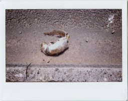 Roadkill. Penarth. Instax 210